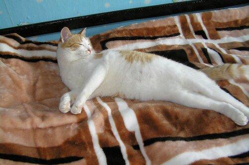 Феликс блаженствует на новеньком одеяле