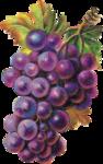Виноград  0_6633e_9aa9d432_S