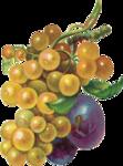Виноград  0_66346_e36fbf2a_S