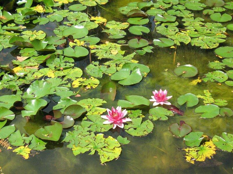 Водяные сады с нимфеями в Парке Сигурта.