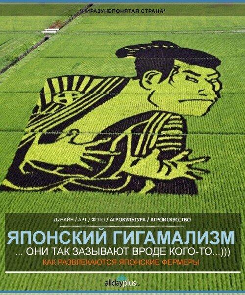 Колоритная агрокультура, как масштабные объекты искусства. Япония. Простые японские фермеры.