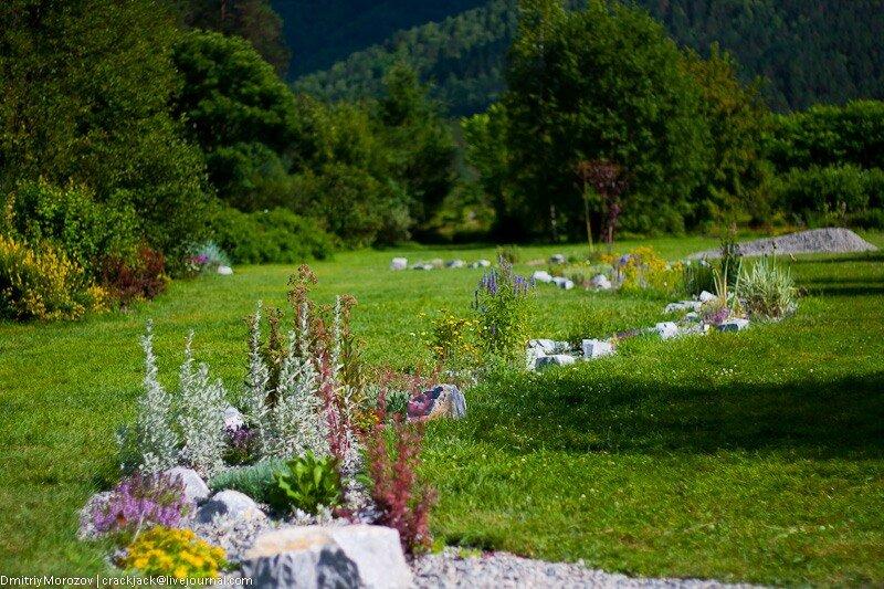 ботсад, ботанический, горный алтай, 2011, экскурсии,