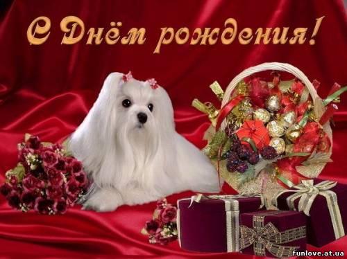 С днем рождения! Собачка, подарки, цветы.