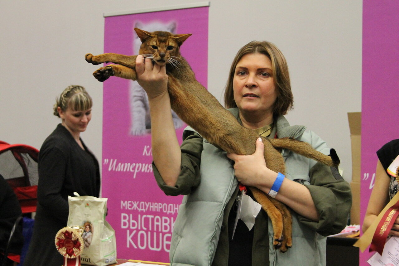 FARUS Autumn Cat Show-2013