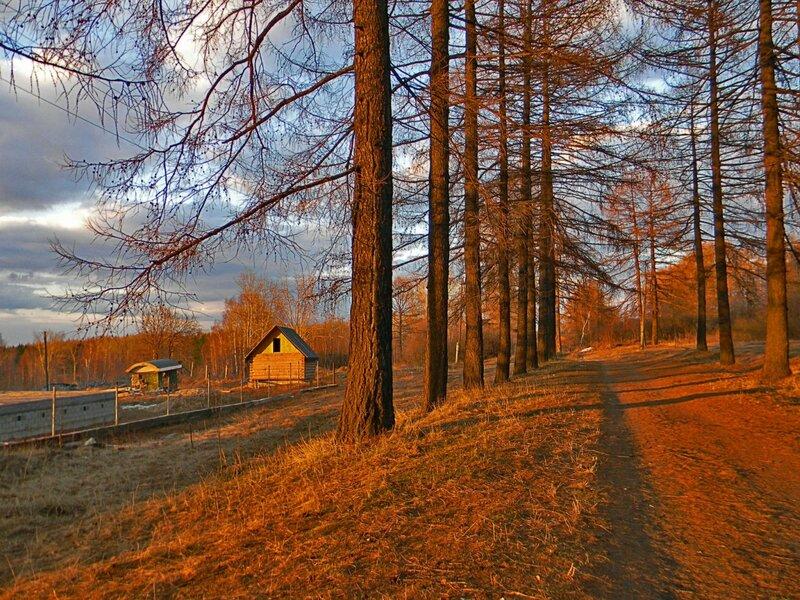 Весенний закат в лиственничной аллее