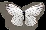 http://img-fotki.yandex.ru/get/4912/97761520.d1/0_7fc44_8ec5d1f4_orig.png