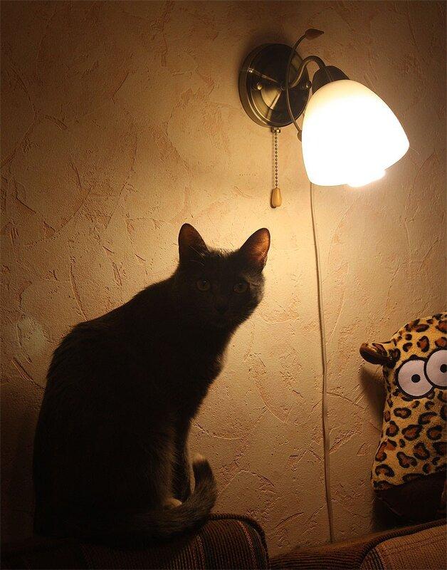 Тинки таинственная, ночная