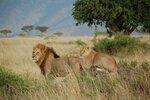 ASDwebs_African_1.jpg