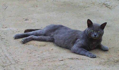 Отдых на песке
