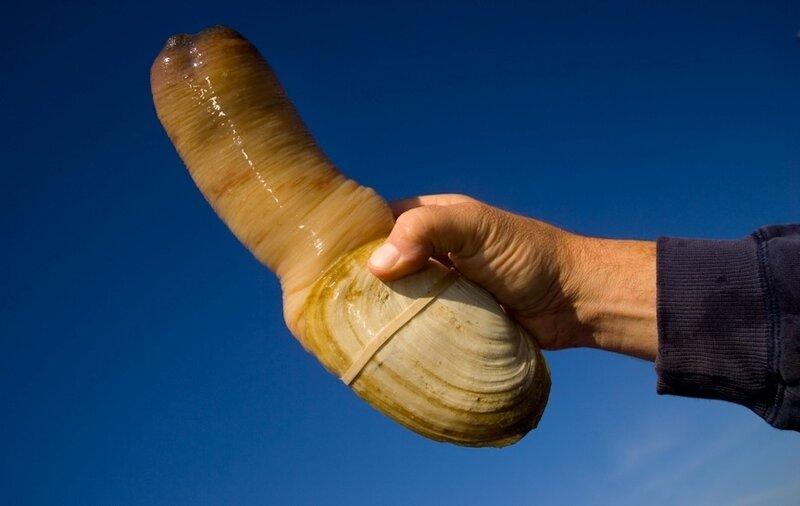 моллюск фото морской
