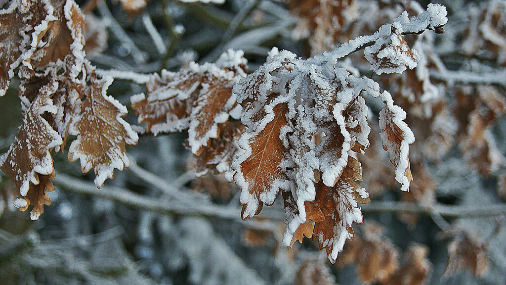 last_nature_leaves_winter_hd-wallpaper-1642431.jpg