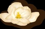 NLD Flower 3 sh (2).png