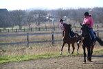 021113 избранное кони