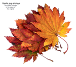 LF-Leaves-31082013.png
