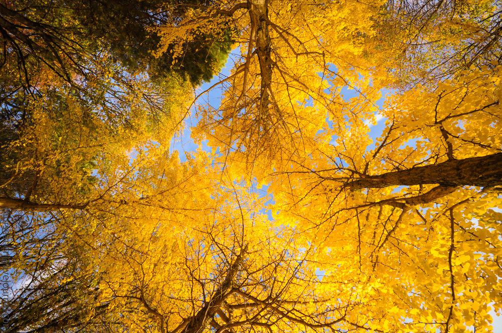 Herbst-Munchen-2013-(74).jpg
