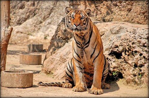 В Тигрином храме