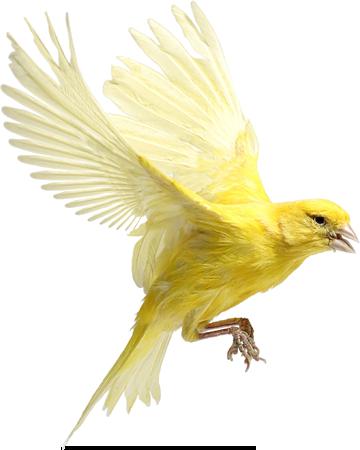Ptice..... 0_98168_375a05dd_L
