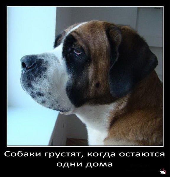 Любопытные факты про собак
