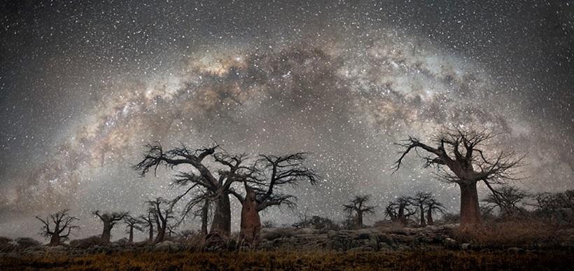 Фотограф Бет Мун: древние деревья Африки под звездным небом 0 136231 ffd55c68 orig