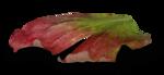 natali_design_apple_leaves15-sh.png