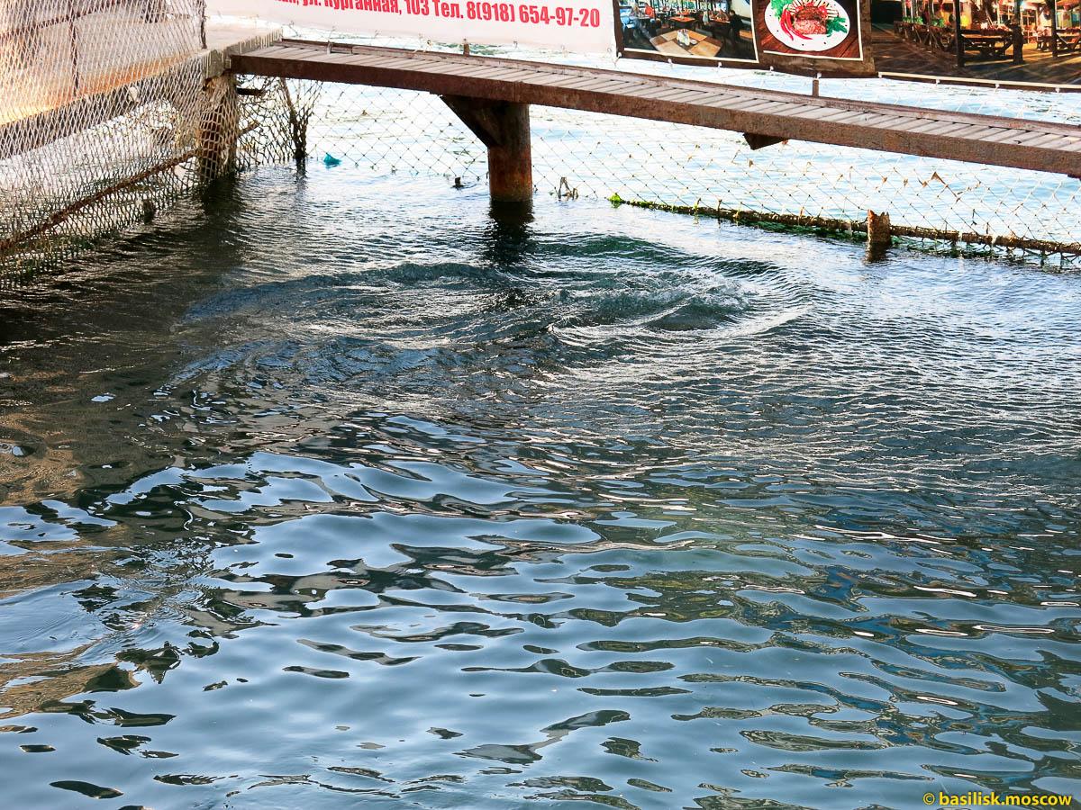 Утришский дельфинарий. 2013.