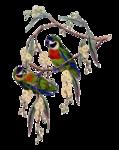 птички в png