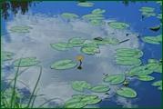 http://img-fotki.yandex.ru/get/49312/15842935.389/0_eaeae_b2191da_orig.jpg