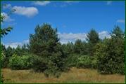http://img-fotki.yandex.ru/get/49312/15842935.38b/0_eaf02_dfe74249_orig.jpg