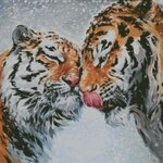 тигриный поцелуй.jpg