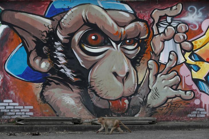 В путеводителях туристов предупреждают, что обезьяны воруют пакеты, фотоаппараты и кинокамеры. Но ра