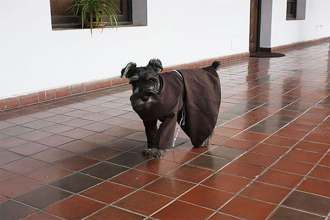 Бродячий пес стал настоящим католическим монахом (10 фото)