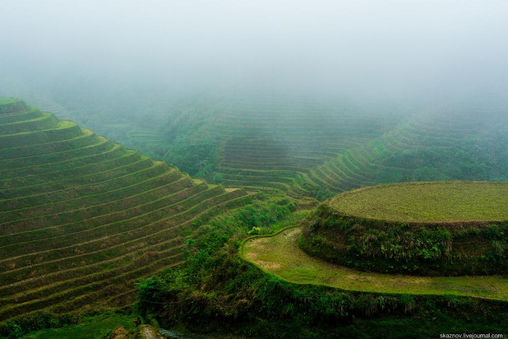 3. Рис посажен на очень небольших участках.