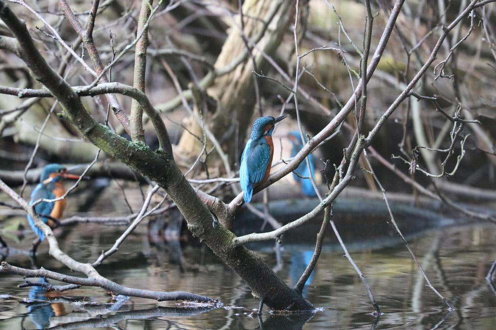 3. Птицы населяют все экосистемы земного шара, включая внутренние части Антарктиды. Согласно да