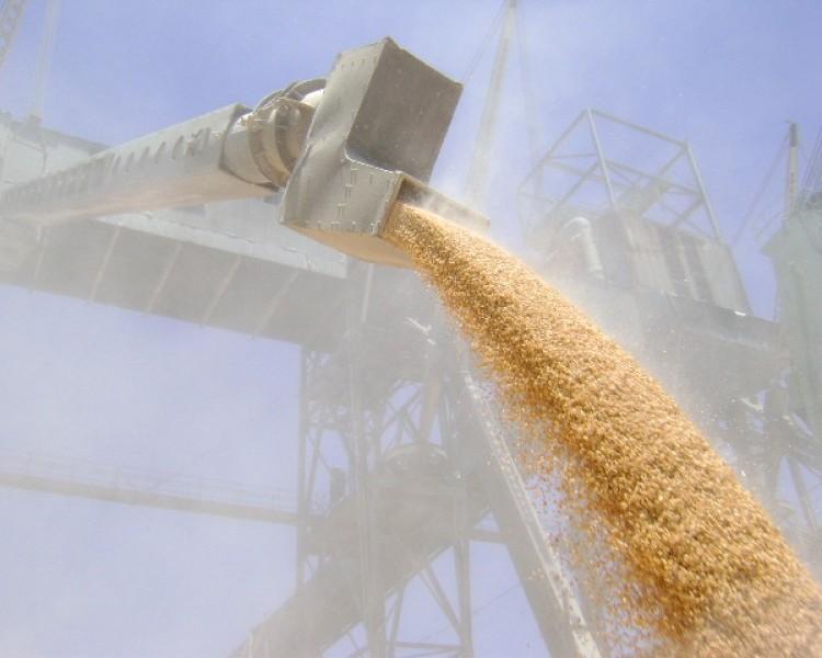17,8 млн тонн пшеницы собрано вКазахстане