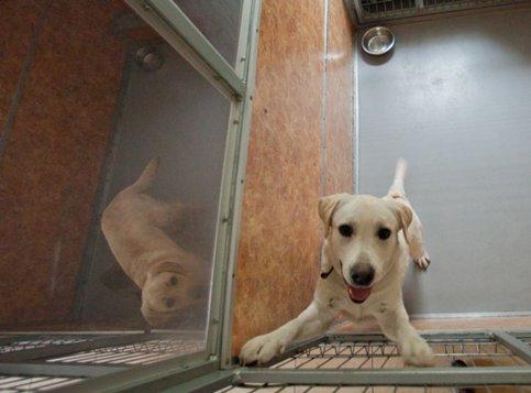 Собаки могут обманывать людей ради выгоды