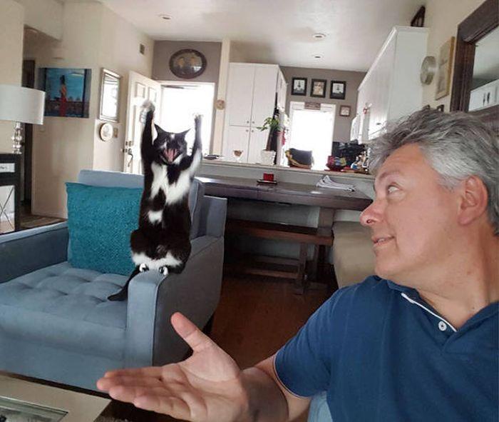 Кошка на что-то намекает