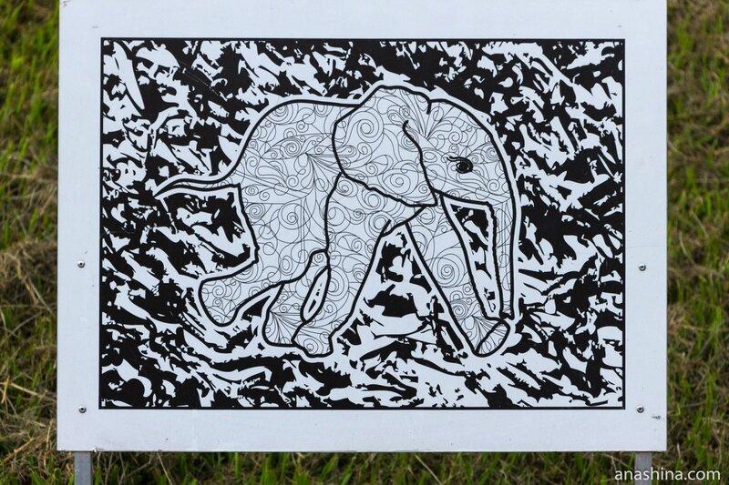 Слон, Сочинский дендрарий