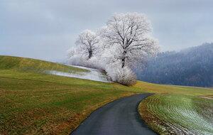 островок зимы