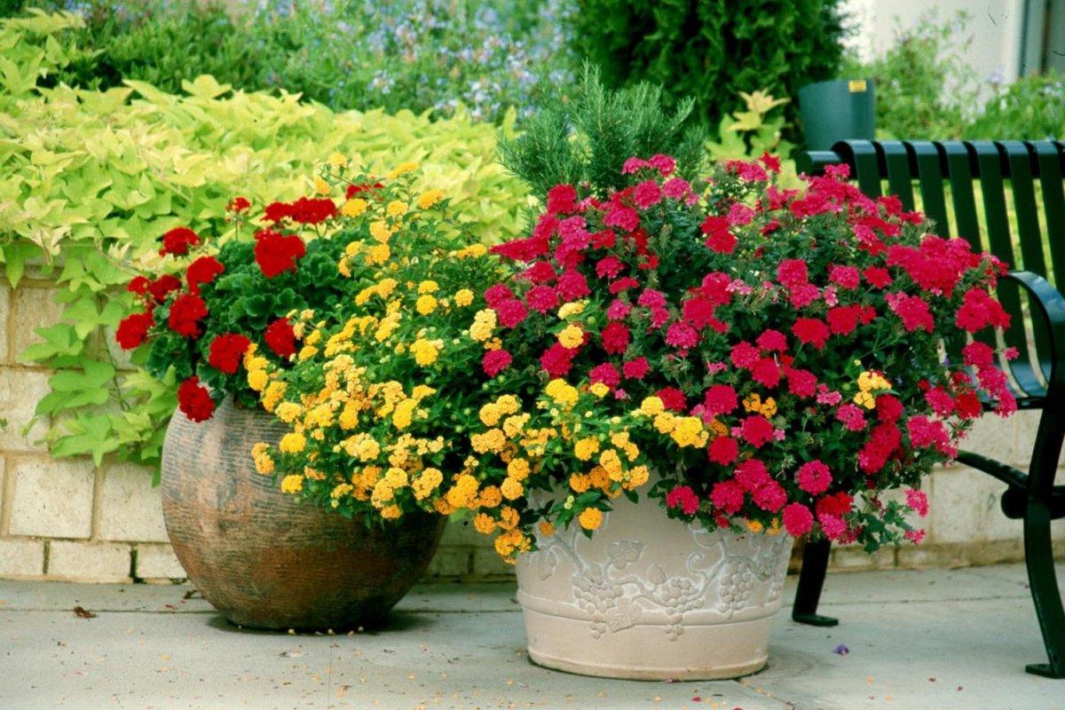Декорирование ампельными растениями