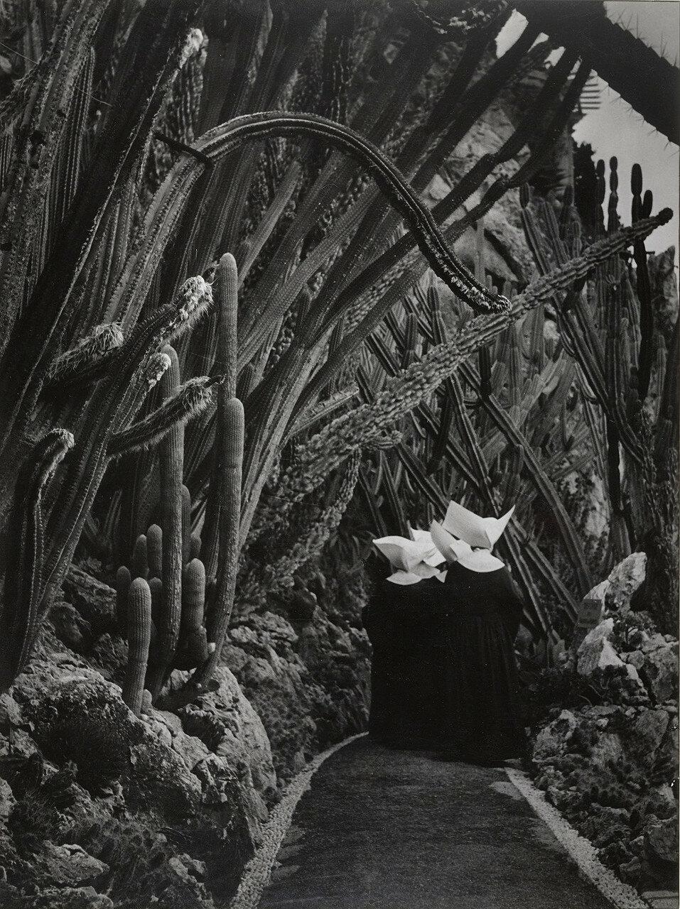 1946. Экзотический сад, Монако