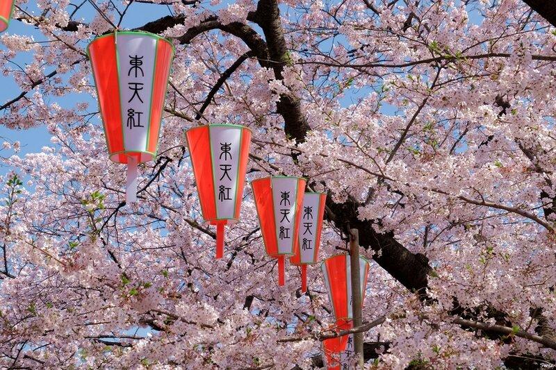 Сакура Парка Уэно Токио