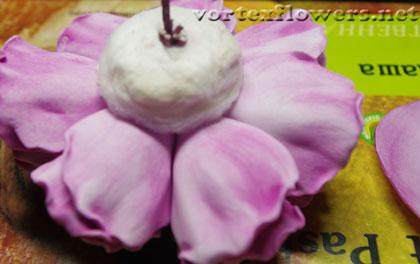 роза Остина из фома