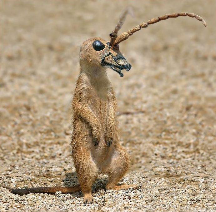 Фантастические животные от Jan Oliehoek