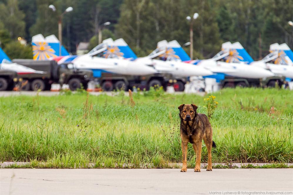 9. Стратегический бомбардировщик-ракетоносец Ту-95МС.