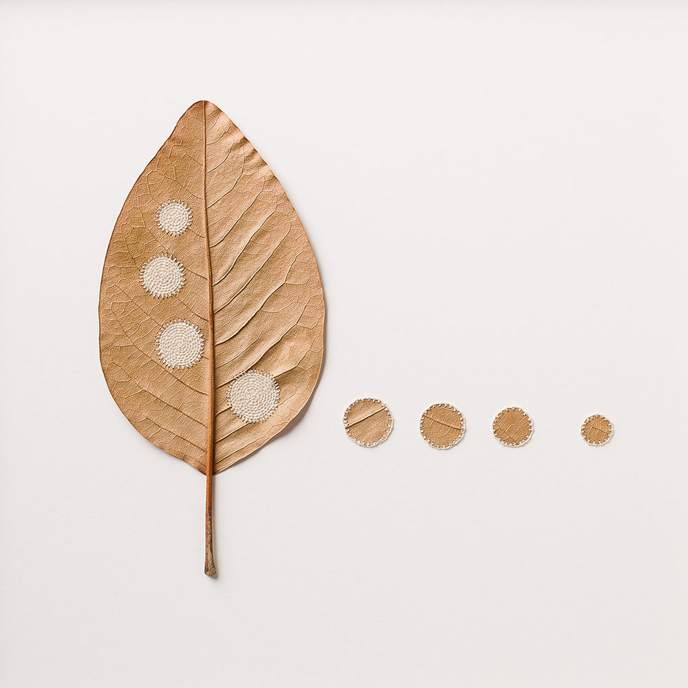 Four Circles. 38 H x 38 W cm. Magnolia leaves, cotton yarn.