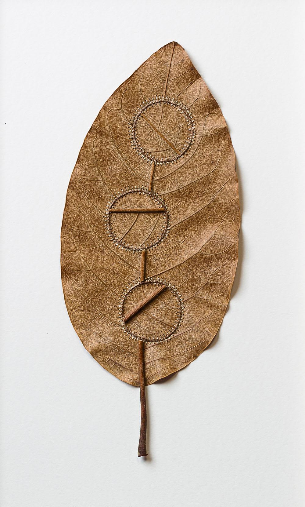 Internal Workings. 35.8 H x 22 W cm. Magnolia leaf, cotton yarn.