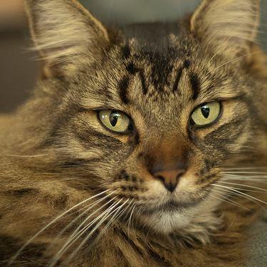 Cat  Jacues , 2010. Toronto.