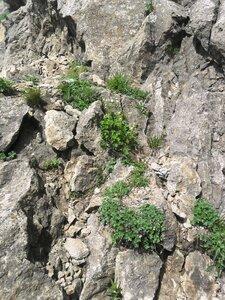 Жизнь на скалах... SAM_6779.JPG