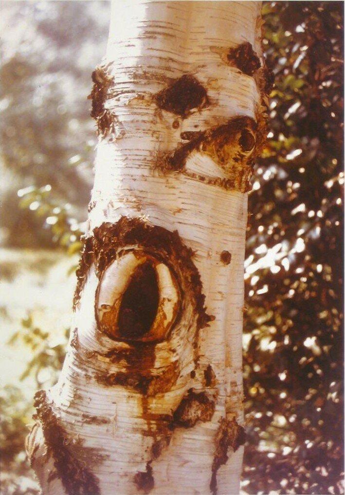 1970. Фрагмент ствола дерева
