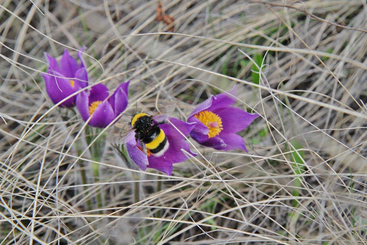 весна Кувандык
